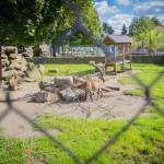 VergissMeinNicht Zoo Hoyerswerda – 14