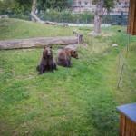 VergissMeinNicht Zoo Hoyerswerda – 19