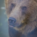 VergissMeinNicht Zoo Hoyerswerda – 21