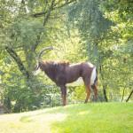 VergissMeinNicht Zoo Hoyerswerda – 29